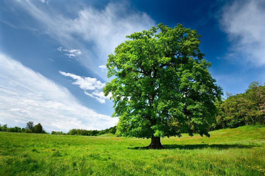stock-tree-1