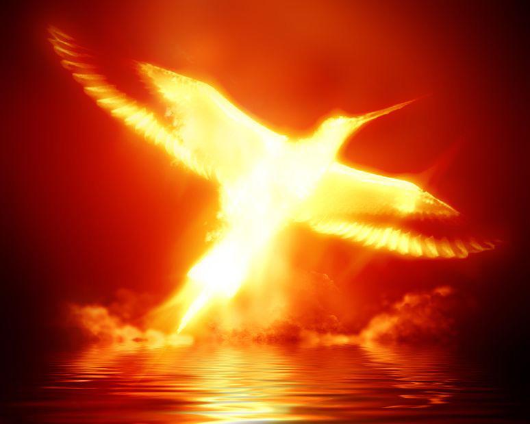 stock-phoenix